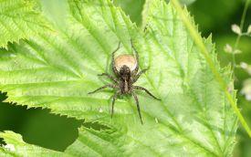 Spider at Escomb, 19th June 2016