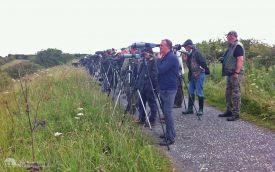 Watching Black-winged Pratincole at Hurworth Burn, 5th July 2014