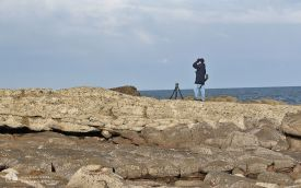 Looking for Black Redstart at Tynemouth, 28th February 2016