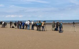 Great Knot twitch at Titchwell, 21st June 2016