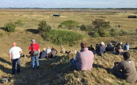 Moltoni's Warbler twitch at Blakeney, 11th May 2015